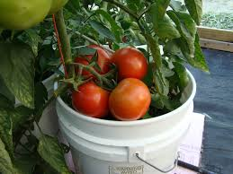 container gardening u2013 15 vegetables to easily grow indian