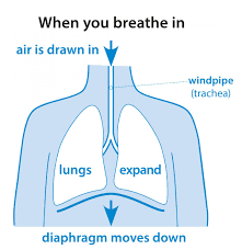 Challenge Can You Breathe Why Do We Breathe Lung Foundation