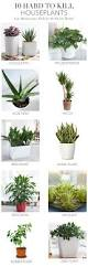 Best Plant For Indoor Low Light Best 25 Plants Indoor Ideas On Pinterest Plant House Plants
