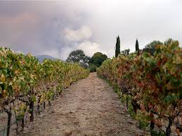 California Wildfires Valley Fire by Santa Rosa Fire How Will Fires Affect The Wine Industry