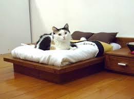 stylish design cat bedroom bedroom ideas