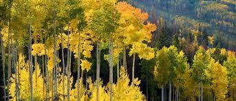 Colorado Vacation Rentals Vail Vacation Rentals Vail Rentals Gore Creek Properties