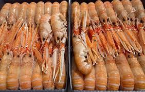 cuisiner homard congelé homard congelé cru frais dans une boîte photo stock image du