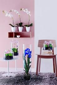 Feng Shui Colors For Living Room Walls Feng Shui Plants For Harmony And Positive Energy In The Living