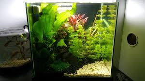 Petsmart Christmas Aquarium Decorations by Dirted Desk Cube 4g Uber Pic Heavy The Planted Tank Forum