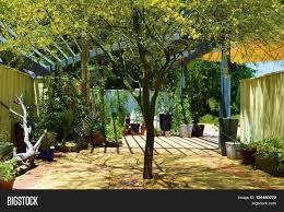 Potted Patio Trees by Outdoor Patio Including Potted Plants And A Palo Verde Tree With