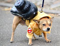 Costume Party Wikipedia by File 2015 Hallowenn Dog Costume Party 9 Jpg Wikimedia Commons