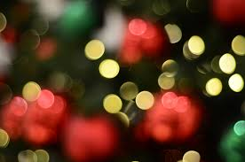 christmas tree flower lights free images light bokeh blur abstract plant night sunlight