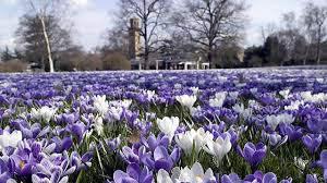 spring in london things to do visitlondon com