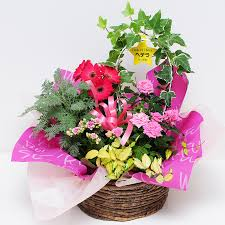 birthday presents delivery hanako rakuten global market pretty potted flower gifts potted us