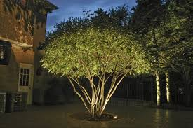 Outdoor Up Lighting For Trees Tree Uplighting Search Yard Pinterest Outdoor Up Lighting