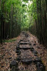 Hawaii travel tags images Best 25 bamboo forest maui ideas hawaii in jpg