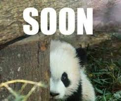 Funny Panda Memes - 1000 images about funny photos and memes on we heart it see