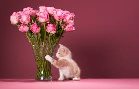 mothers day delivery digital supply chain for s day flower delivery