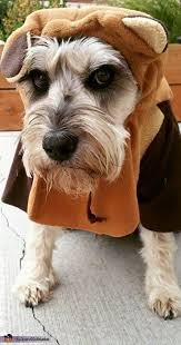 Ewok Dog Halloween Costume 8 Images Dogs Diaper Clutch