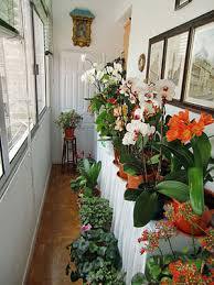 indoor plant display how to clean new houseplants before you display them