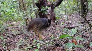 animals of the daintree rainforest youtube