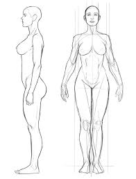 Female Anatomy Reference 648 Best Anatomy For Artists Images On Pinterest Art Tutorials