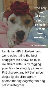 Seeking Pitbull The Only Thing Vicious About Pit Bulls Is Their Seeking Ari
