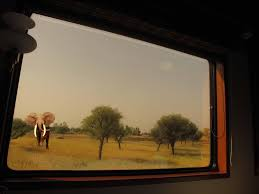 wildlife excursion in ranthambore aboard maharajas u0027 express