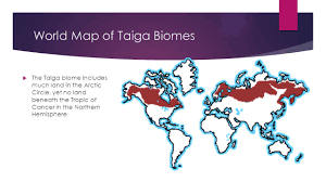 World Map Biomes by Taiga Biome By Jackson Burns Location U0026 Size The Taiga Biome