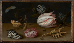 a tulip shells a and a butterfly on a table kunsthandel p