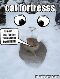 Meme Lol Com Wp Content - cat fortress cold for cats lol meme is pawesome lol cat research
