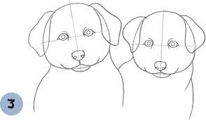 training a australian shepherd puppy australian shepherd puppies learn to draw dogs u0026 puppies book