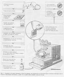 introducción a la técnica histológica