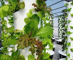 Vertical Aeroponic Garden Local Tower Garden Farmer Produces Aeroponic Food For Disney