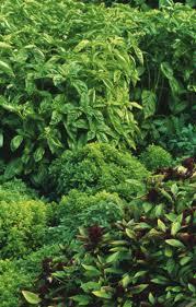 29 best thai style garden design images on pinterest thai style
