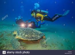 abu activity animal turtles background beautiful beauty