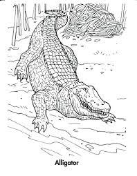 crocodile hunter coloring pages printable cute sandile pokemon