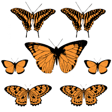 butterfly clipart free stock photo public domain pictures