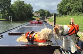 thames river boats dogs ropes on the river cruising on the river thames on a narrow boat