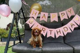 dog birthday party woman throws blown 1st birthday party for beloved dog