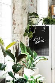 plante cuisine decoration décoration originale cuisine tableau noir et plante verte loft