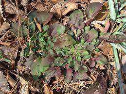 louisiana native plant society current articles anps blog arkansas native plant society we