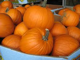 pumpkins for sale living green olympia colorful leaves check pumpkins for sale