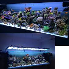Marine Led Light Bulbs by Aquarium Lighting Information Guide Reef Planted Par Pur Pas