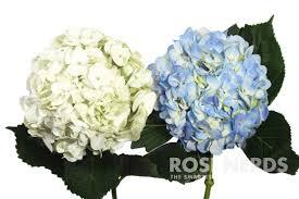 wholesale hydrangeas wholesale mixed white blue hydrangea wedding mixed white blue