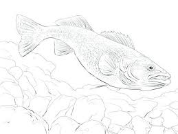 salmon fish coloring page salmon coloring page extraordinary ideas pike animal coloring pages