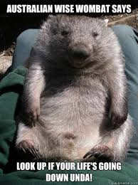 Wombat Memes - australian wise wombat says look up if your life s going down unda