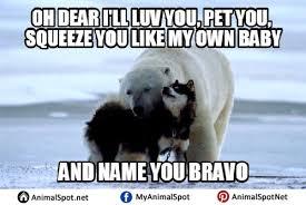 Bear Memes - polar bear memes