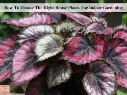 how to choose the right house plants for indoor gardening exotic