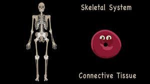 Anatomy And Physiology Songs Human Anatomy Songs At Best Way To Study Anatomy And Physiology