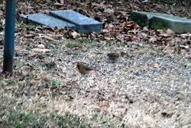 the nickajack naturalist backyard nature february
