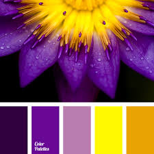aubergine aubergine color bright purple bright yellow color