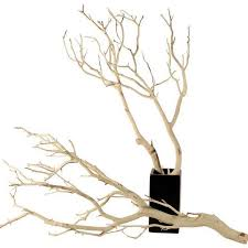 manzanita branches wholesale 12 sandblasted manzanita branches of 30