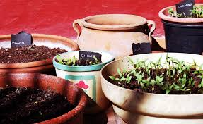 vegetable container gardening for beginners garden of containers